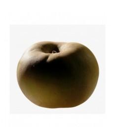 Manzana canada gris